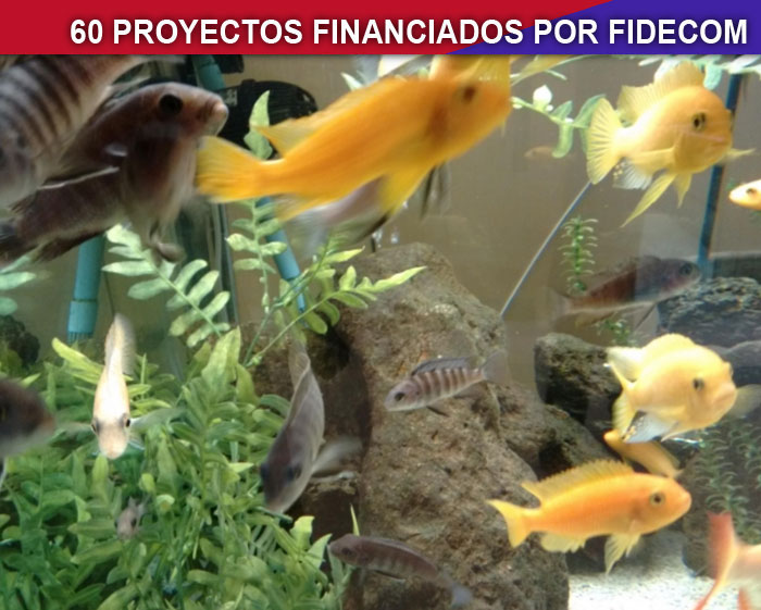 Producci n de peces ornamentales inn vate per for Manual de peces ornamentales