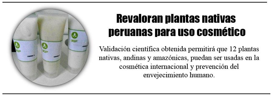 Revaloran plantas nativas peruanas para uso cosmético